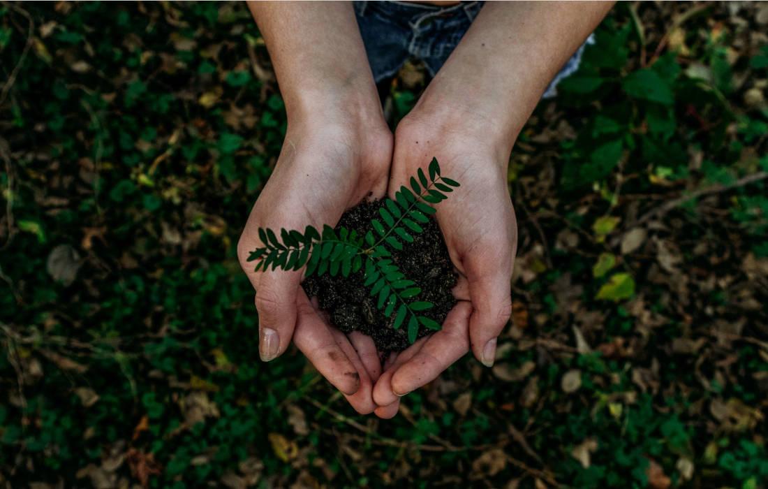 Roślina trzymana w dłoniach