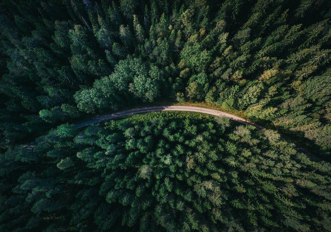 Ekomarketing: Volkswagen sadzi drzewa w Polsce